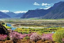 林芝桃花村:藏在高原里的桃花源