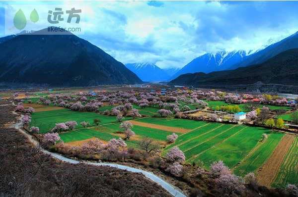 桃色林芝南迦巴瓦的雪 西藏林芝桃花攻略