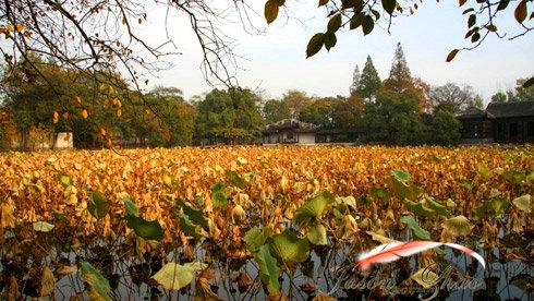 上海骑行南浔古镇—喧嚣与幽静的转换