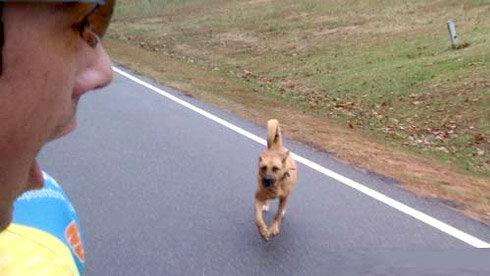 户外课堂:当骑车时遇到凶狗的几点应对技巧