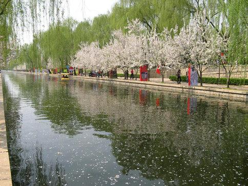 海棠笑迎客留步看花溪 元大都公园海棠节