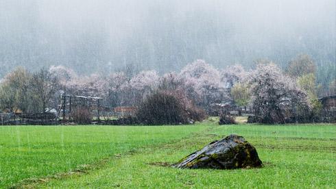 阳春三月 去西藏林芝看雪域高原的桃花仙境