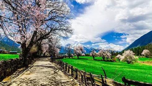 人间四月天 重庆时时彩稳赚方案林芝——世界顶级桃花风景线