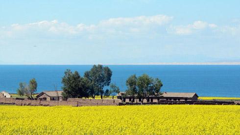 青海湖——中国最美的赏花骑行路线