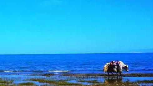 【暑假去哪儿】环青海湖骑行路线+攻略