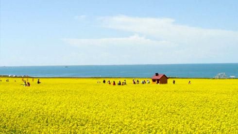 魂牵梦绕青海湖——青海湖美图分享
