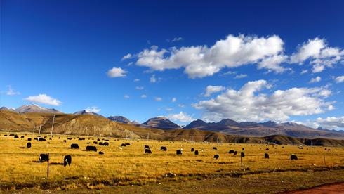 80张高清图片,告诉你10月的西藏是个什么样子