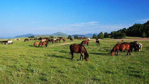 《芈月传》外景拍摄地——乌兰布统红山军马场骑行路线