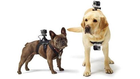 GoPro发布首款狗狗专用配件:让狗狗秒变你的摄像师
