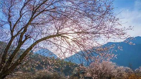 在哪桃花盛开的地方:去重庆时时彩稳赚方案林芝看中国最美春天吧
