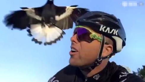 愤怒小鸟真实版!车友骑行中被鸟连击13次