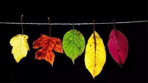 拍秋天美景,就用这10个方法,美爆朋友圈!