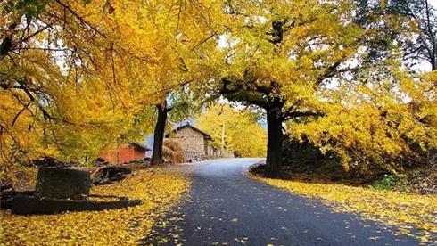 """10个拍""""小黄片""""的好地方,让你这个秋天不再寂寞。"""