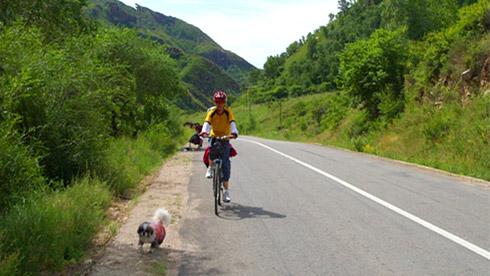 狗狗陪我去骑行:老人、自行车与狗狗的故事